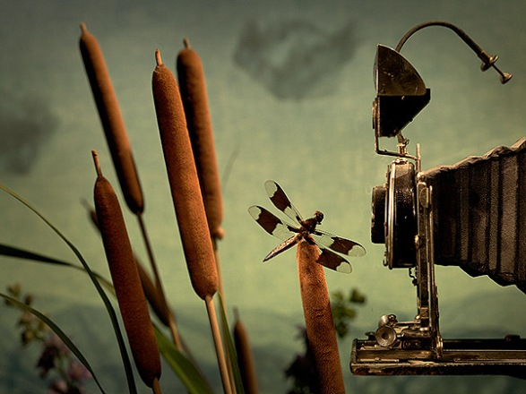 Antique camera bellows overlooking cattails and a dragonfly.